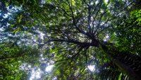 KL-Eco-Forest-Park-Bukit-Nanas