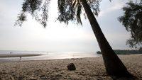 Coconut palm trees and Casuarinas dot the beach in Pantai Morib.