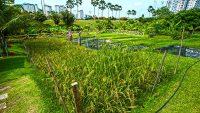agricultural-heritage-park-putrajaya