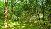 agricultural-heritage-park-rubber-plantation