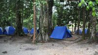 commonwealth-forest-park-camping