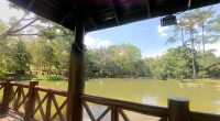 flamingo-pond-taman-wetland-putrajaya