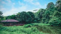 Located near the Sekolah Kebangsaan FRIM at Jalan Kapur, the wetland area of FRIM used to be a tin mining pool and vegetable farms.