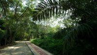 kuala-selangor-nature-park-jogging-path