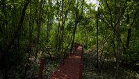 kuala-selangor-nature-park-mangrove-swamp