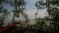 mangrove-swamp-kuala-selangor-nature-park
