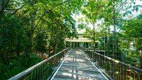 putrajaya-botanical-garden-canopy-bridge