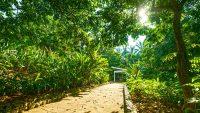 putrajaya-botanical-garden-jogging