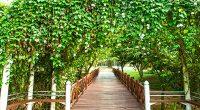 putrajaya-taman-rekreasi-air-wetland