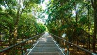 taman-botani-putrajaya-canopy-bridge