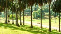taman-botani-putrajaya-jogging